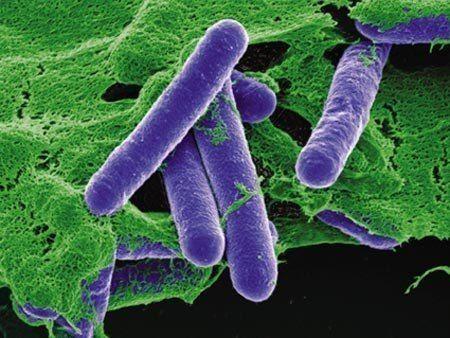 4 кг бактерии Clostridium Botulinum достаточно, чтобы убить всё человечество