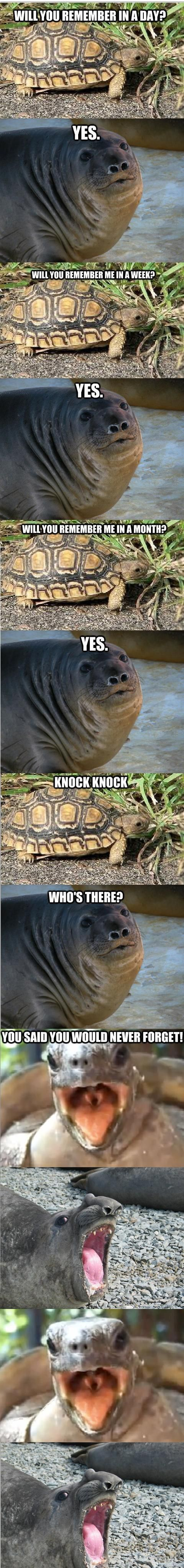 You said you would never forget! ~Turtle to Sea Lion