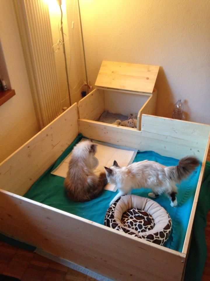 A whelping box for cats, great idea to build one like this!