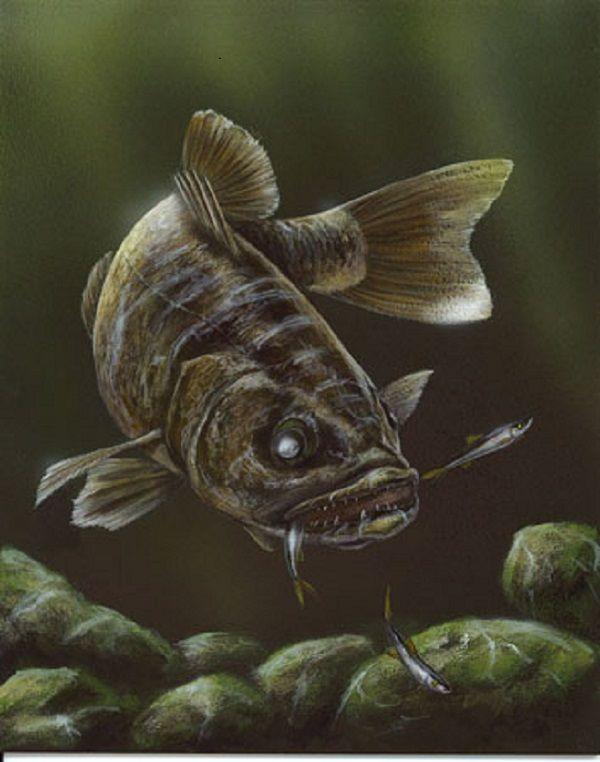 Best 25 walleye fishing ideas on pinterest for Walleye fishing tips
