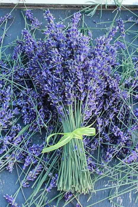 Lavender Bunch By Laura Duda