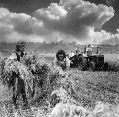Image result for vegetable farmer plowing painting Australia
