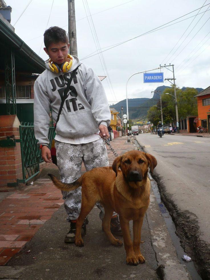 BARUK, hijo de Vivatma, se reporta. Es todavía cachorro, tranquilo y equilibrado. Será gigante, el enano!!!