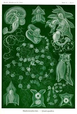 ERNST HAECKEL (1834 – 1919) WAS A GERMAN BIOLOGIST, NATURALIST, philosopher, p… – Francisco Silva II
