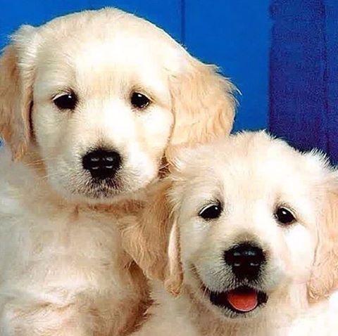 Good Morning My Love bit.ly/1S3ikBI  #insta_dog #instadog #instadogs #instagramdog #lazydog #lovedog #lovedogs #mostlovedogs #mydog #nationaldogday #assistancedog #banddog #cancerdog #cattledog #epilepsydog #familydog #farmdog #guidedog #hounds #huntingdog #petdog #policedog #rescuedog #searchandrescuedog