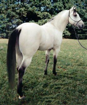 And i thought there was no such thing as a white horse with a black mane and tail