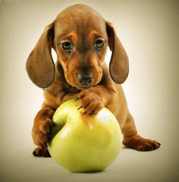 Apple Pie via Pretty Fluffy