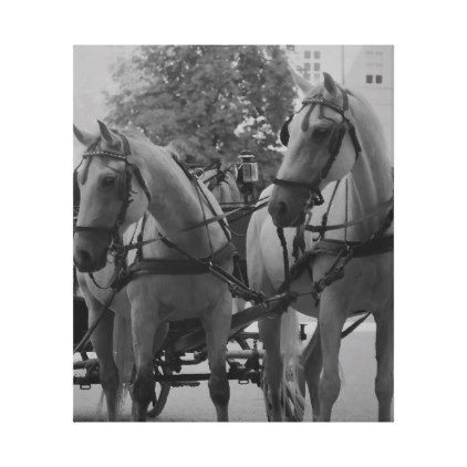Salzburg Fiaker Horses in black and white. Canvas Print - white gifts elegant diy gift ideas
