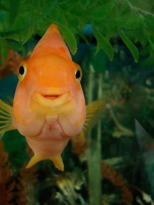 936 best images about ♔ HAPPY ANIMALS (smiling, laughing) ♔ on Pinterest   Smiling animals ...