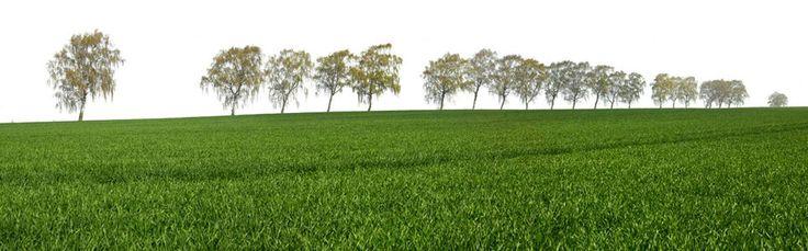 Fototapeten Mit Eigenem Motiv : Fototapete, Landschaft mit Birke (Nr. 8442) www.berlintapete.de