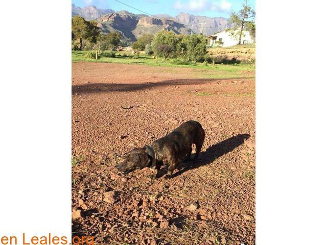 Perros encontrados  España  Las Palmas - Gran Canaria  San Bartolomé March 13 2018 at 11:39PM   GRAN CANARIA  #PERDIDO #ENCONTRADO  Contacto y Info: https://leales.org/perdidos-o-encontrados/perros-encontrados_1/gran-canaria_i3762 #Difunde en #LealesOrg un #adopta y sé #acogida para #AdoptaNoCompres O un #SeBusca de #perro o #gatos ℹ Este perrito ha sido encontrado deambulando por el albergue de Chira. Es un mix de Teckel macho pelo corto y aparentemente joven. Al principio no se acercaba…