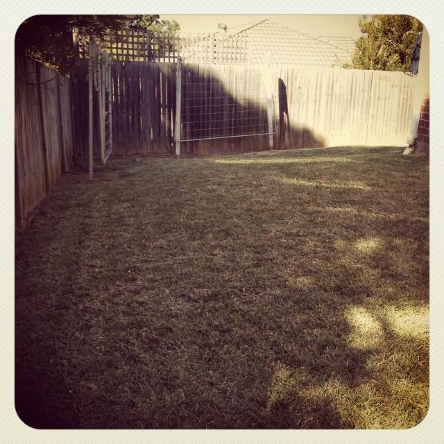 Day 7 - garden. Our non existent garden #photoadayjuly
