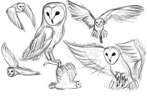 Image Result For Tumblr Owl Drawing Art Pinterest Art Drawings