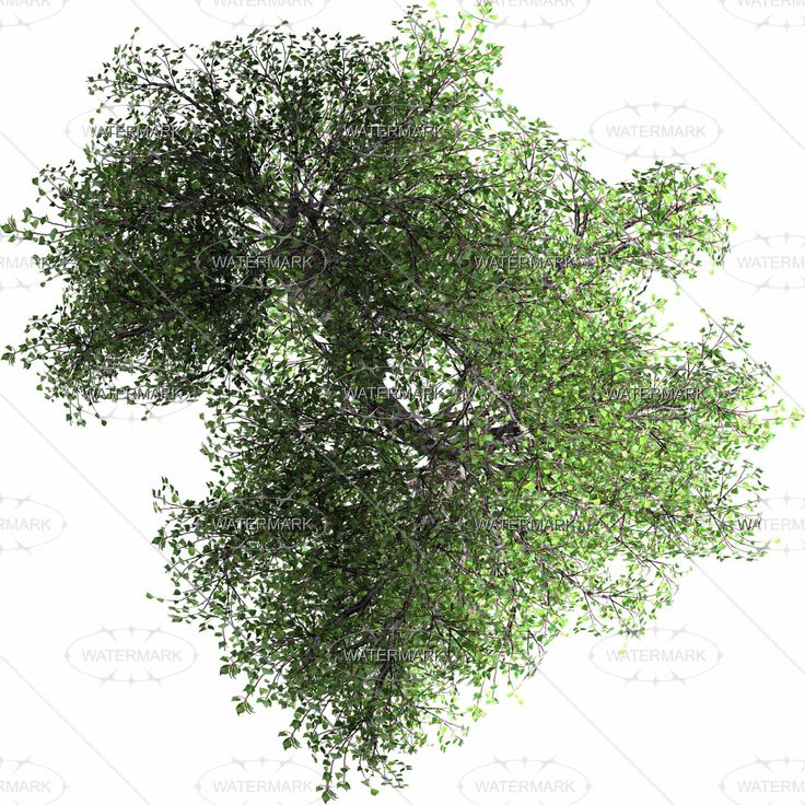 Shrub Graphic Symbols Diagram Chevy Ignition Coil Wiring Pin By Huang.s On Tree/people And So | Trees Top View, Tree Tops, View