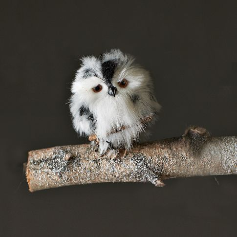 Oh my gosh!: Cute Baby, Little Owl, Sweet, Baby Owls, Pet, Owl Ornament, Feathers, White Owl, Ornaments