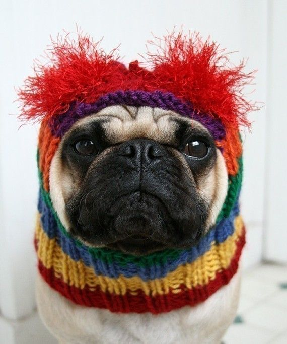 rainbow bright dog hat. I couldn't do this to Miles but I think it's adorable!