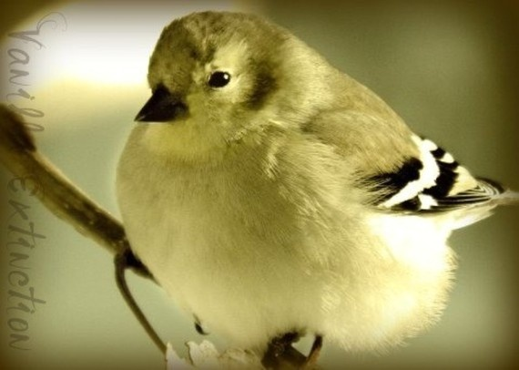 Birds, my favorite