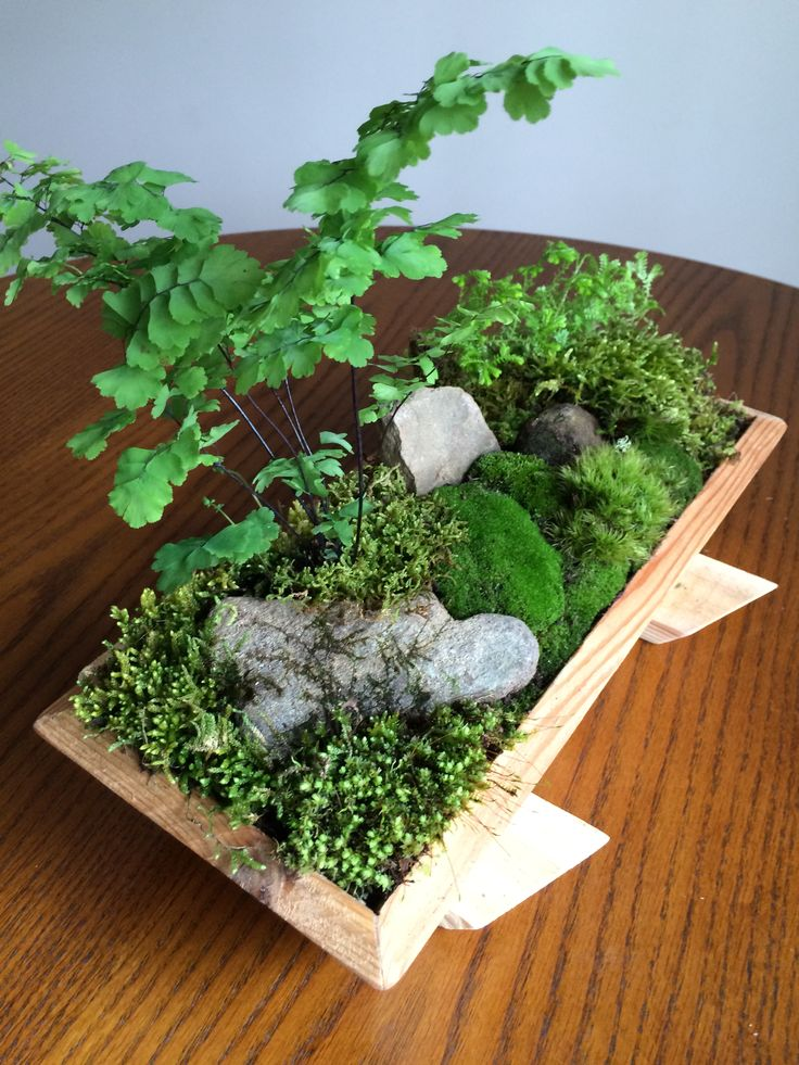 311 best images about terrariums tray gardens and more on for Tray garden designs