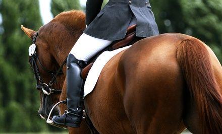 SARL Haras de bois soleil à Méounes : Cours et stages d'équitation: #MÉOUNES 12.90€ au lieu de 25.00€ (48% de réduction)
