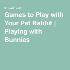 Games to Play with Your Pet Rabbit | Playing with Bunnies