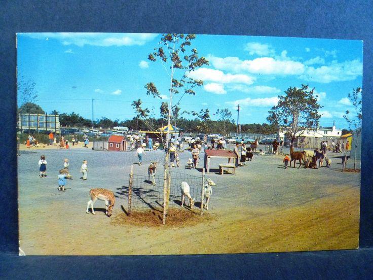 Postcard NY Rochester Lollypop Farm Petting Zoo Humane Society | 1960s