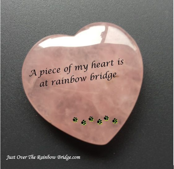 Many pieces of my heart are at Rainbow Bridge.  My many loves.  Charade, LeBeau, Raven! Minute, Savannah, Autumn, Colby and our last, my love, Jax.