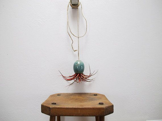 Hanging plant [Mudpuppy by Michael McDowell]: Hanging Airplant, Hanging Ceramics, Hanging Plants, Blue Green, Air Plants, Ceramics Air, Plants Ideas, Air Planters, Airplant Pods