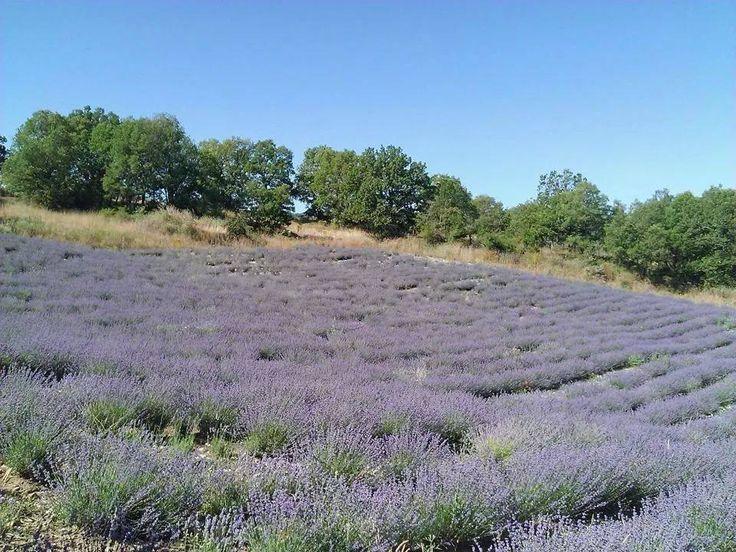 Καλό μήνα... Πρωτομαγιά...Άνοιξη... Η αναγέννηση της Φύσης... Με την ευκαιρία ακούστε το τραγούδι για τη λεβάντα και ταξιδέψτε νοητά στα ανθισμένα χωράφια στο site μας www.lavendergreece.gr