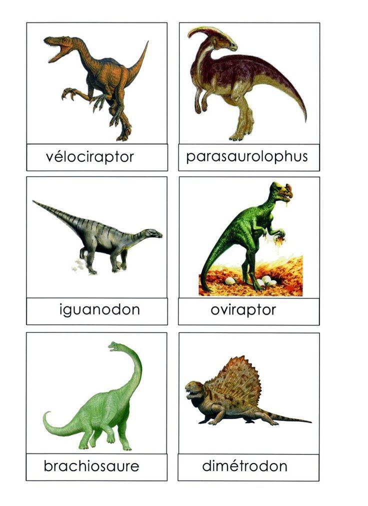 6 illustrations et noms de dinosaures sont affich�s sur un mur �loign� de l'endroit o� les �l�ves travaillent: dans le coin regroupement, dans le couloir ou m�me � l'ext�rieur. Les �l�ves doivent aller voir le lexique � distance (sans emporter d'�tiquettes-mots...