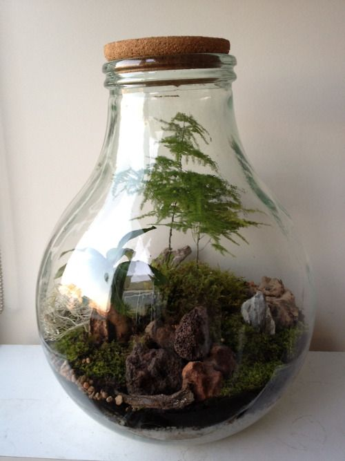beautiful italian glass bottle turned terrarium with a fig and fern feature to do list. Black Bedroom Furniture Sets. Home Design Ideas