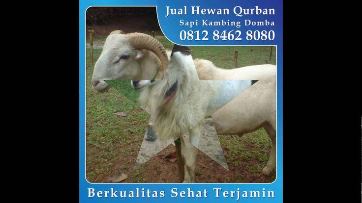 0812_8462_8080 (Tsel) Jual Hewan Kurban di Fatmawati