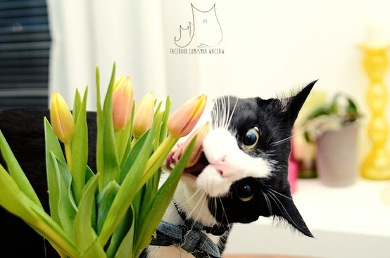 Smo on international women's day #cat #tulips