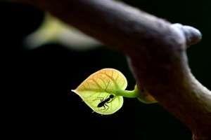 Экологичные технологии насекомых - пример для людей