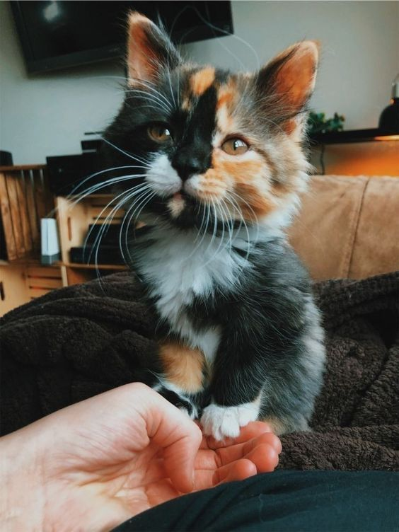 Socializing Your Kitten: What You Need To Know