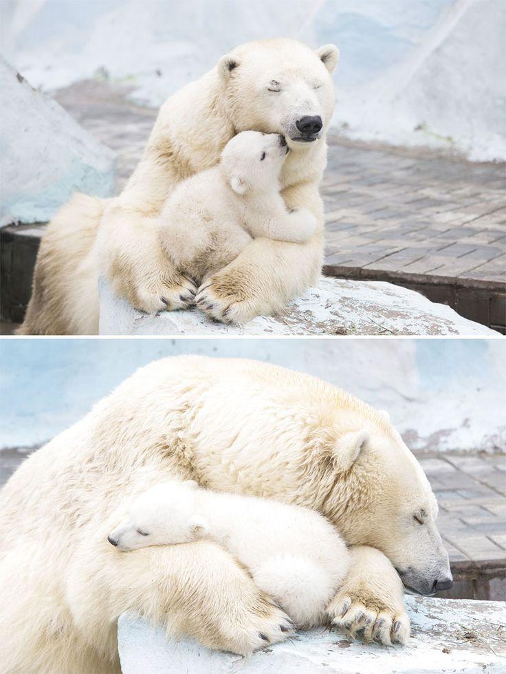 30-adorables-photos-de-mamans-ourses-avec-leurs-oursons-5 30 adorables photos de mamans ourses avec leurs oursons