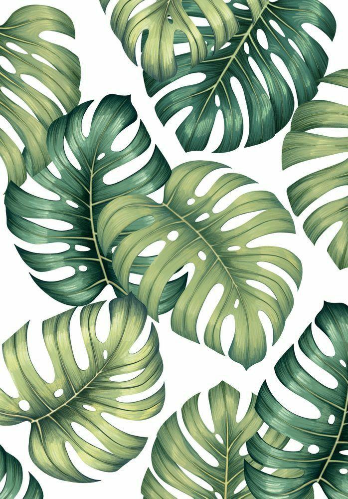 Pin Oleh Pettinari Felicitas Di Oboi I Fony Foto Abstrak Lukisan Kaktus Lukisan Bunga