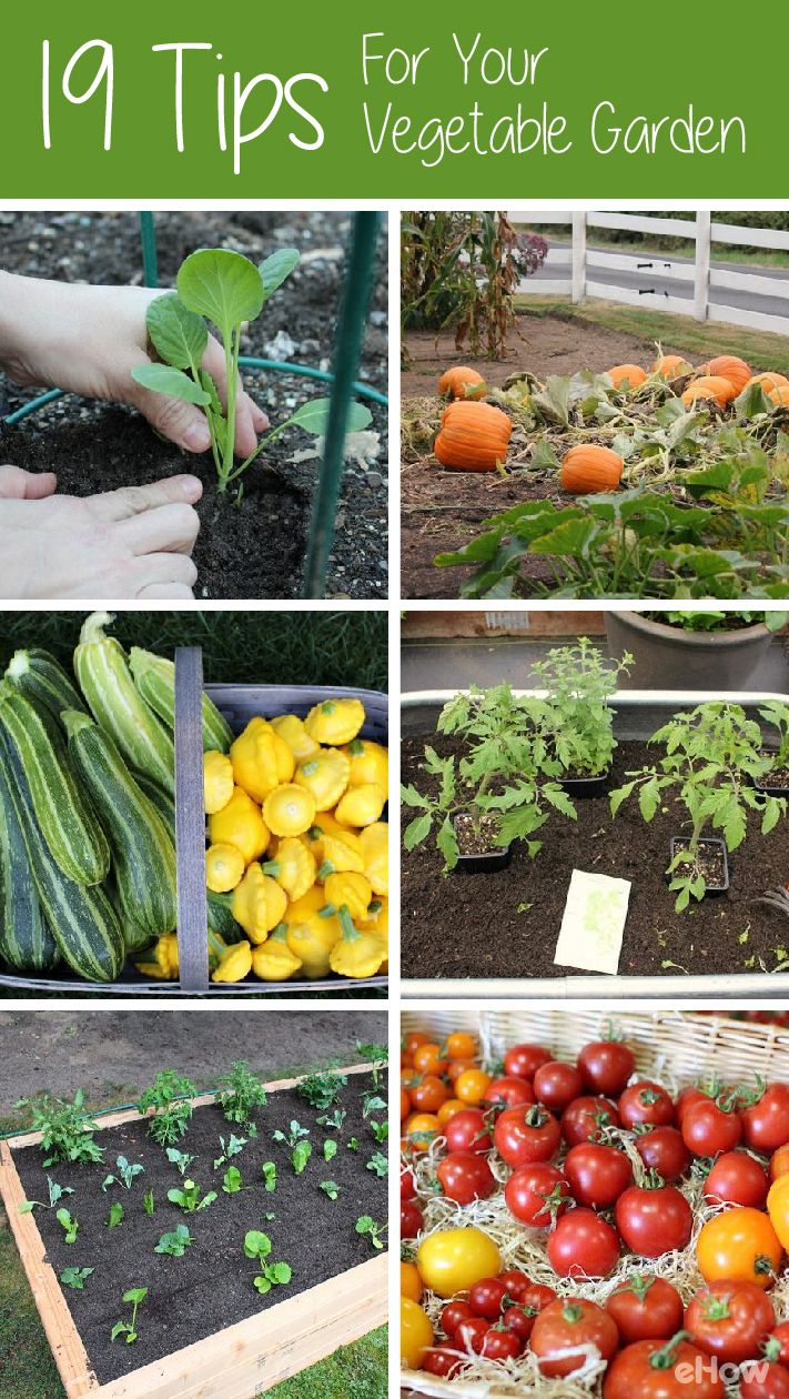 19 tips to get a vegetable garden growing gardens grow for Grow your own vegetables
