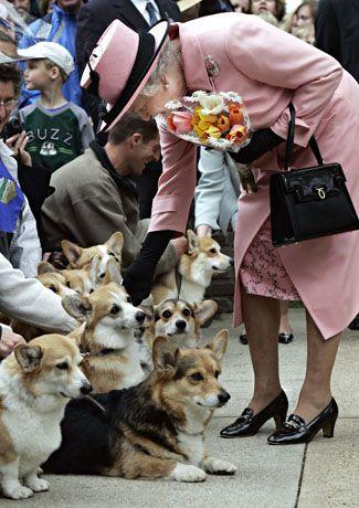 Nothing makes the Queen happier than a corgi. (AP Photo/Canadian Press, Paul Chiasson)