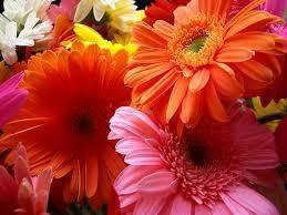 best flower image wallpaper