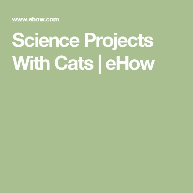 Science Projects With Cats   eHow