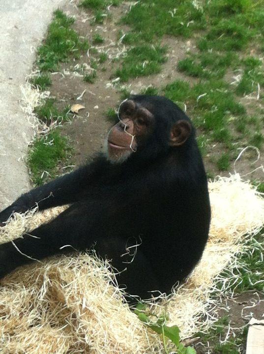Monkey World - Ape Rescue Centre in Wareham, Dorset