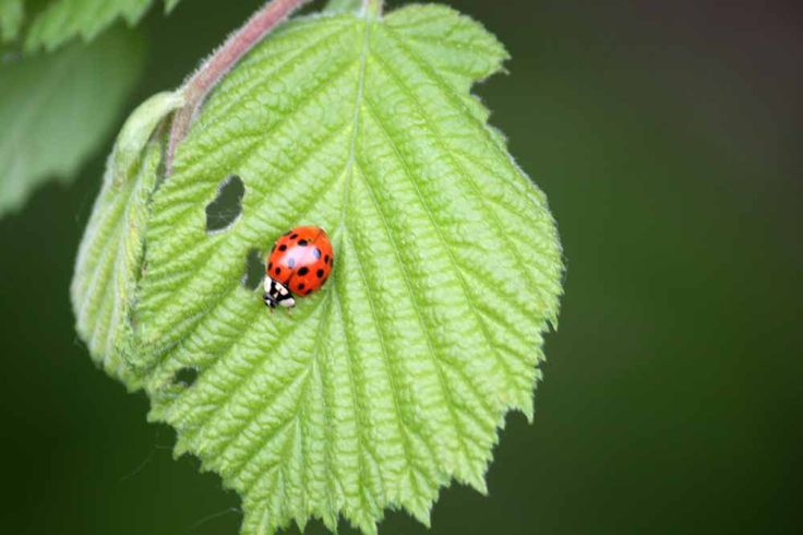 Ladybird - There are other carnivores in the birds of prey park besides the raptors.