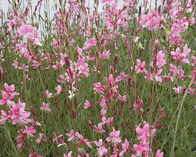 A List Of Drought Tolerant Plants For Xeriscaping