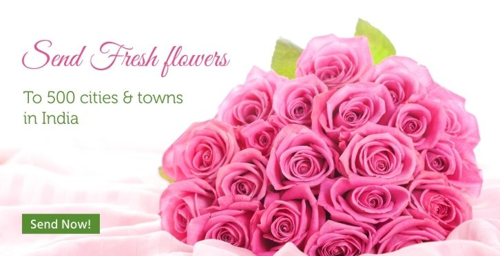 Roses Varieties in Bangalore for Rose Day Gifts