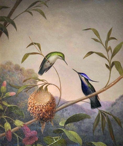 Blue-Crested Hummingbirds, 1864 Martin Johnson Heade | Tumblr