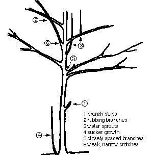 Outdoor Spring Cleaning How And When To Prune Trees Shrubs Pinterest Tree Pruning