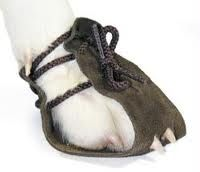 dog boots - Google Search