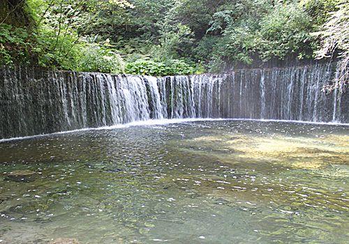 Shiraitonotki (ksruizawa)