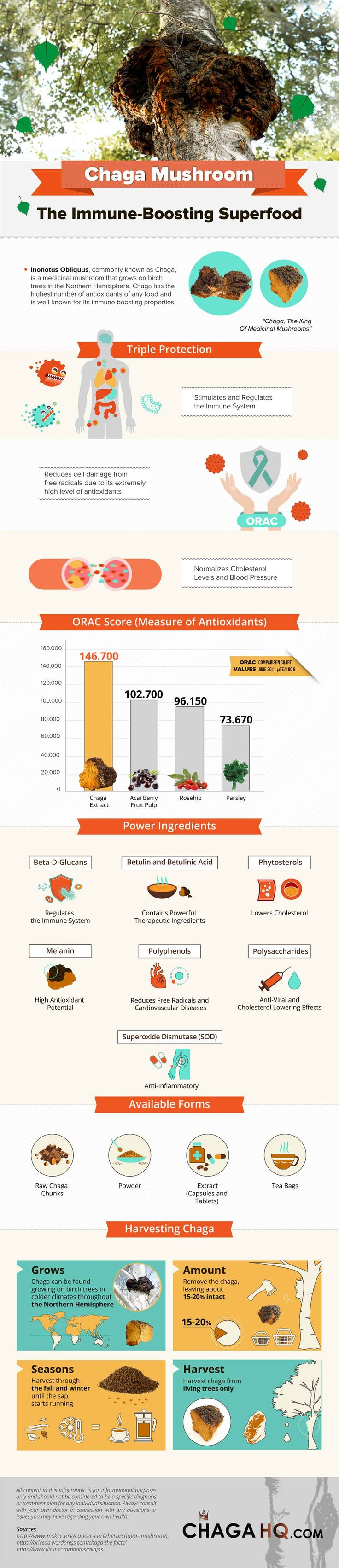 A Chaga Mushroom Infographic, which covers the many benefits of chaga plus other useful info.