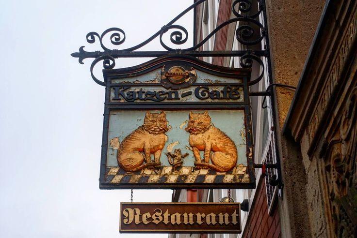 'Cat Café' December 18 2016  #vlogdave #youtuber #bremen #germany #photography #fotografie #photographer #photographyislife #catcafe #katzencafe #sightseeing #cats #architecture #bremencity #outandabout #deutschland #germancity #vscogermany #picoftheday #colors #colorful #snapshot #instagood #instadaily #exploring #explorer